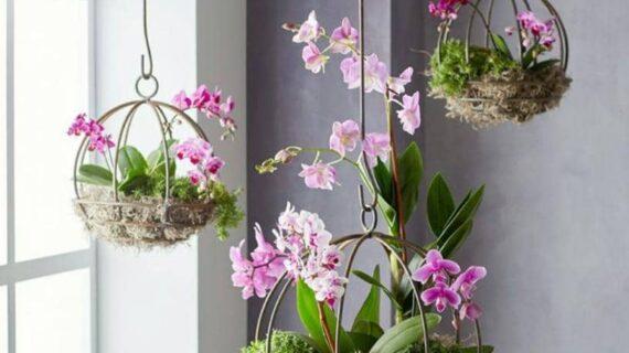 Guía práctica de cómo tener orquídeas preciosas cómo cuidar tus orquídeas